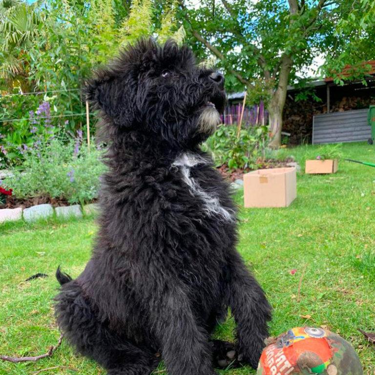 di Terra Meiga - heeft u een vraag - hondenschool